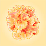 Tropical flowers  yellow hibiscus  vector Stock Photos