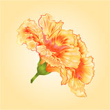 Tropical flowers yellow hibiscus vector Royalty Free Stock Photography
