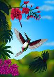 Tropical Flying Hummingbird in the jungle, one image of my self created series `Tropical Birds, 2017` Stock Photo