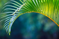 Tropical foliage. Iconic palm leaf in tropical paradise in Far East Royalty Free Stock Photos