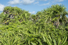 Tropical foliage Royalty Free Stock Photo