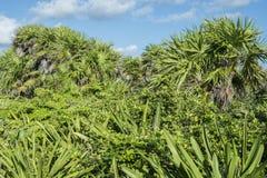 Tropical foliage royalty free stock photo