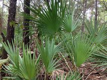 Tropical Foliage stock image