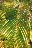Tropical Foliage Royalty Free Stock Photos