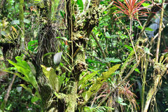 Tropical foliage Stock Photo