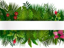 Tropical foliage. Floral design background Royalty Free Stock Photos