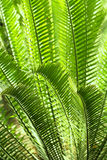 Tropical foliage Stock Photography