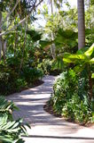 Tropical foothpath exotic palm forest. Summer holiday vacation Stock Photo