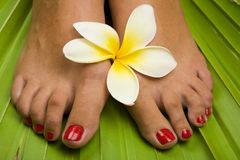 Tropical Footspa Stock Photos