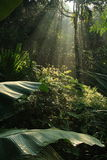 Tropical forest. Morning sunlight falling on tropical forest Stock Images
