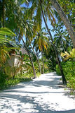 Tropical forest. Pathway in tropical forest, Maldives Royalty Free Stock Image