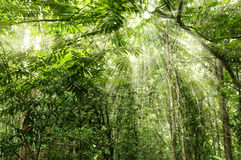 Free Tropical Forest Royalty Free Stock Photo - 14263805