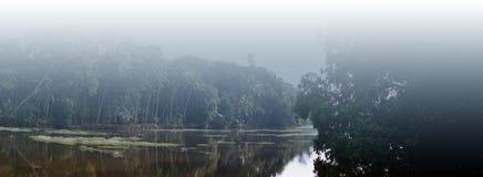 Tropical forest. Goa - India. Jungle Stock Photos