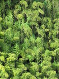 Tropical forest. Hawaiian forest seen from far away Stock Images