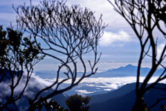 Tropical forest. View of tropical south east asian rainforest (earth's lungs) among the clouds and distanced mountains Stock Photography