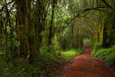 Tropical forest. In South Africa, Limpopo Province Royalty Free Stock Images