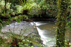 Tropical forest Royalty Free Stock Photography