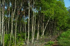 Tropical forest. Asian tropical forest royalty free stock images