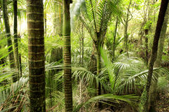 Tropical forest Royalty Free Stock Image