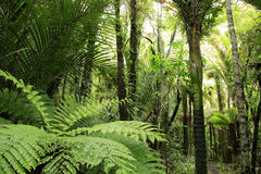 Tropical forest Stock Photos