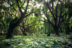 Free Tropical Forest Stock Images - 39478784
