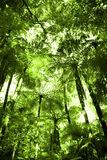Tropical forest Stock Image