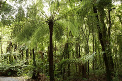 Tropical forest Stock Photography