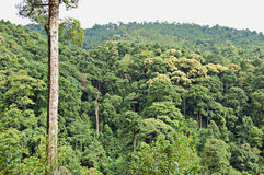 Tropical forest. In northern Thailand Royalty Free Stock Photo