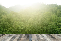 Tropical forest above a wooden floor Stock Image