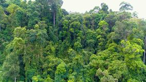 Tropical forest. Aerial. Thailand. Flight over the jungle. Aerial. Thailand stock footage