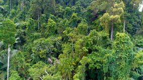 Tropical forest. Aerial. Thailand. Aerial video of the jungle from top to bottom stock footage