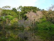 Tropical forest on the Amazon river. Forest on the Amazon river, with trees mirrored in water stock photos