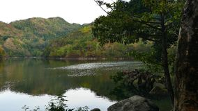 Tropical Forest around Lake Balanan 02 stock video footage