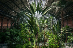Tropical forest inside the railway station of Atocha Stock Photos