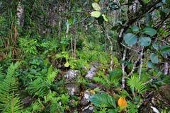 Tropical forest on Auyantepui, Venezuela Stock Photography