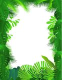 Tropical forest background Royalty Free Stock Images