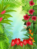 Tropical forest background Stock Photography