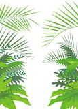 Tropical forest background Stock Images
