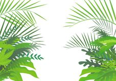 Tropical forest background. Illustration of tropical forest background Stock Image