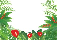 Tropical Forest Background Stock Image