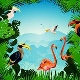 Tropical Forest Background Stock Photo