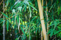 Tropical forest; Stock Photos