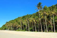 A tropical forest on the beach Royalty Free Stock Photo