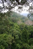 Tropical forest. Bushes, high trees and lianas in the dense topichesky wood Stock Image
