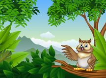 Tropical forest with cartoon owl waving. Illustration of Tropical forest with cartoon owl waving Royalty Free Stock Image