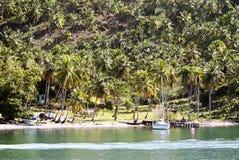 Tropical forest in Cayo Levantado, Dominican Republic. Stock Photos