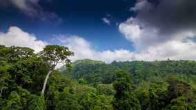Tropical forest with clouds running to camera time lapse. Tropical green forest with clouds running to camera and shadows on trees time lapse stock footage