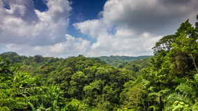 Tropical forest with clouds time lapse. Tropical green forest with clouds and shadows on trees time lapse stock video footage