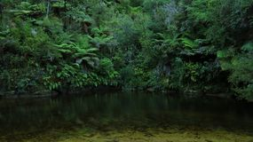 Tropical forest and creek Stock Photo