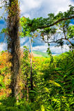 Tropical forest in Cuba. With mountains in the distant background Royalty Free Stock Image